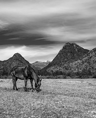 Travel photography, destination south Chile: pucon volcano black and white horse