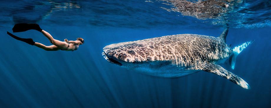 Sharkokmore.jpg