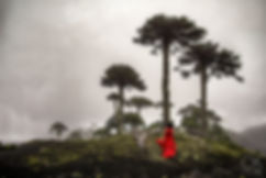 woman in red dress dances among araucaria trees in villarrica, chile