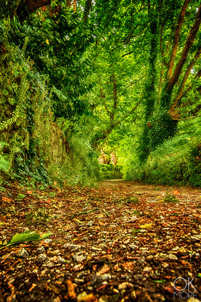 Forest trail in Bretagne, France, landscape photography