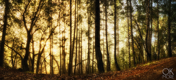 Landscape photography: northern California hills at sunrise between trees