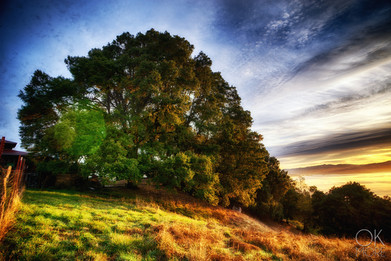 Travel photography destination California: humboldt hills tree at sunrise