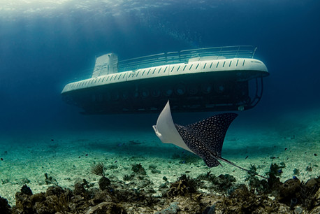 Commercial photography: Atlantis Submarine and eagle ray. Underwater caribbean ocean, mesoamerican barrier reef