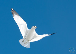 Travel photography destination California: bird flying