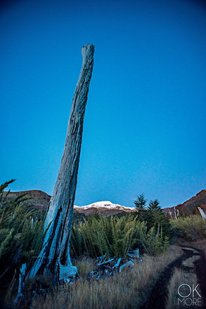 Travel photography, destination south Chile: pucon villarrica volcano dead tree