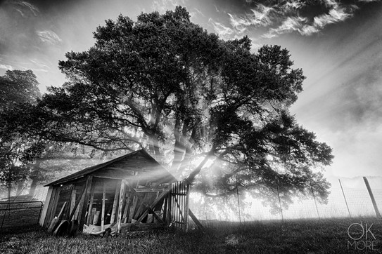 Travel photography destination California: humboldt hills shack and tree at sunrise in black and white