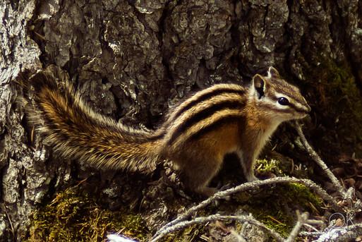 Travel photography, destination Canada rockies, wildlife