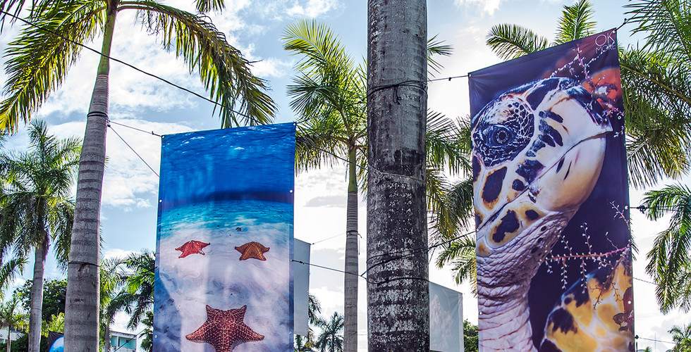 Underwater photo exhibit in downtown Cozumel, Mexico