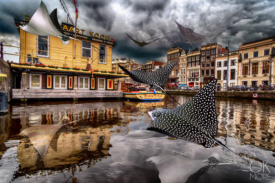Creative street photography: eagle rays flying from Amsterdam Canals