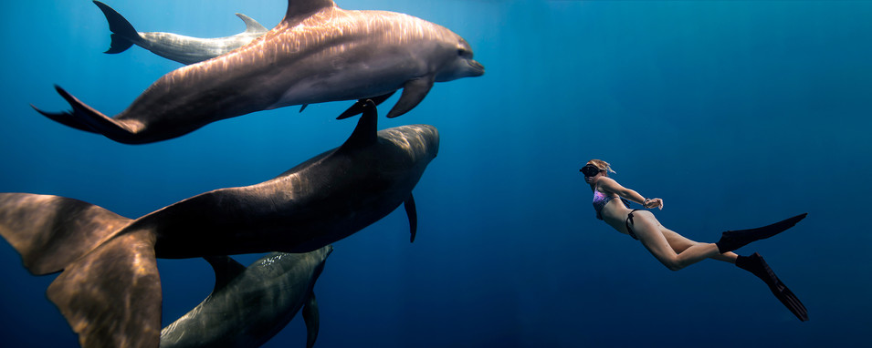Commercial photography: woman freediving with dolphins, shallow underwater