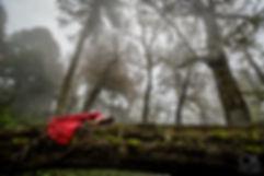 woman in red dress lays on a fallen tree in Villarrica, Chile