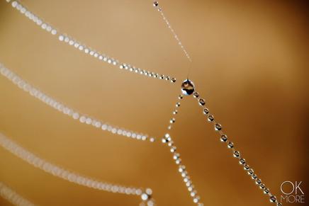 dew on spiderweb composition, macro photography