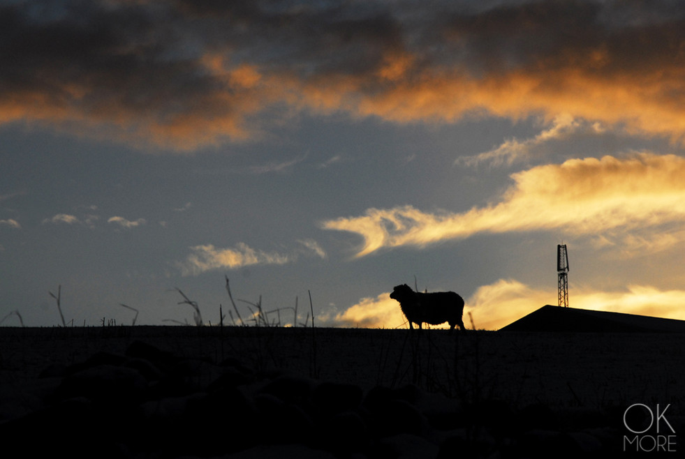 Travel photography destination Shetland island, Scotland lerwick town coast sunset sea winter snow sheep farm sunset