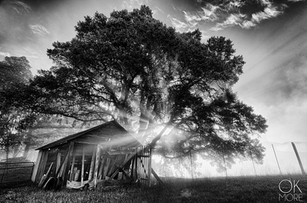 Landscape photography:Landscape photography: northern California hills at sunrise in black and white, tree and goat shed
