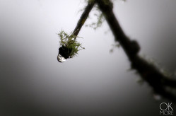 Landscape photography: branch and moss with dew