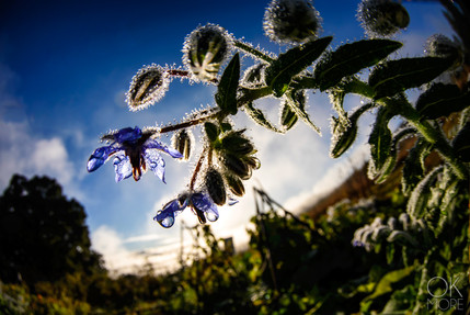 Travel photography destination California: humboldt flowers at sunrise