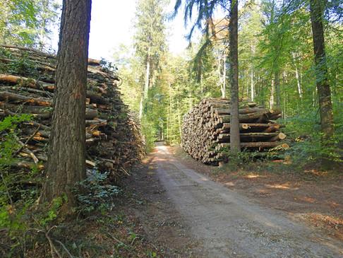 6 Holzhandel 2000x1500px.jpg