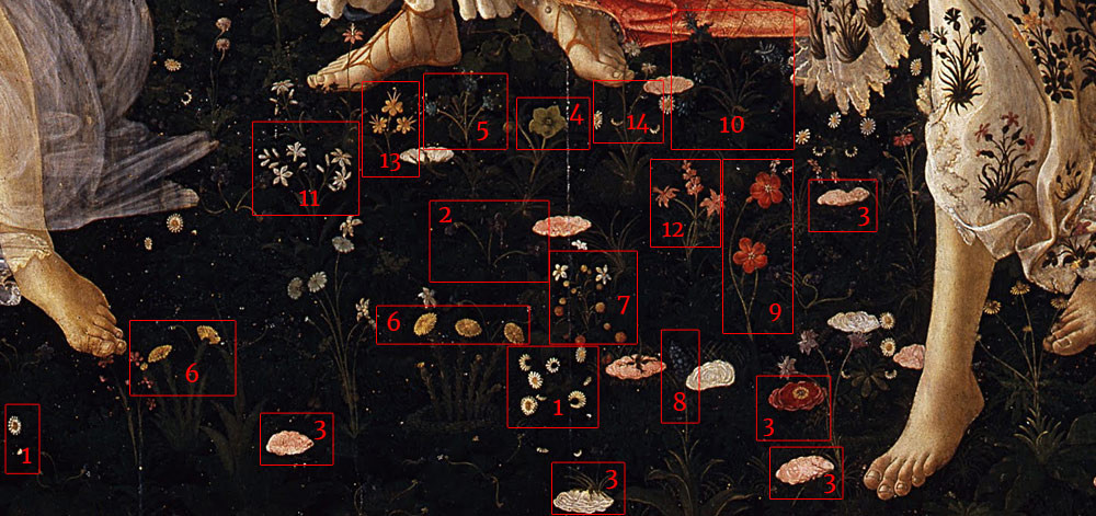 Detailed look at the various flower species shown in Sandro Botticelli's, 'La Primavera'