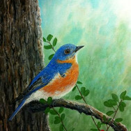 Male Blue Bird