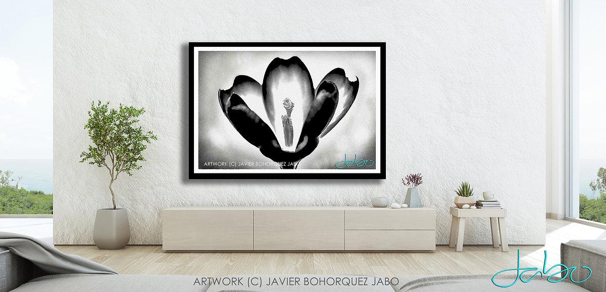 JAVIER BOHORQUEZ BLACK AND WHITE PHOTOGR