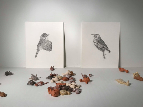 Bird Installation