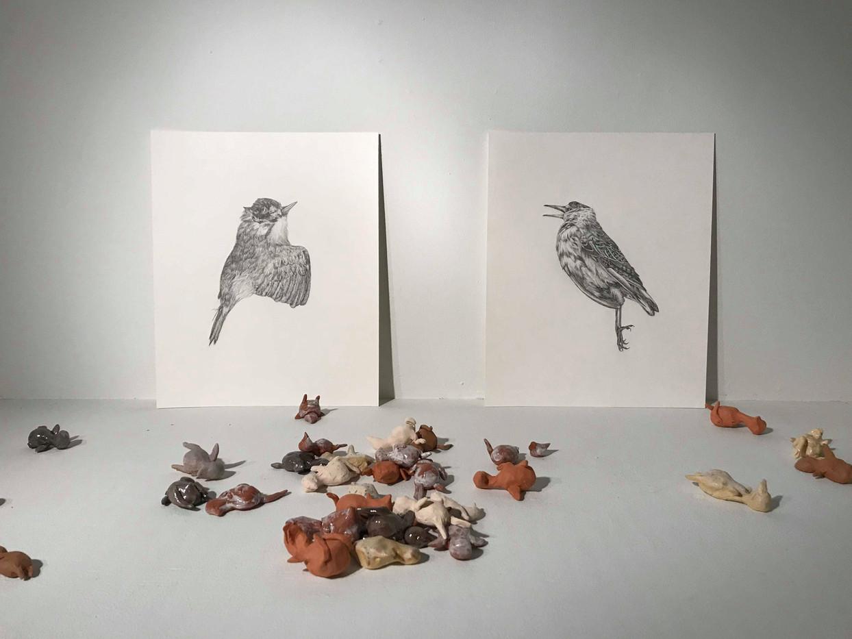 Bird Installation