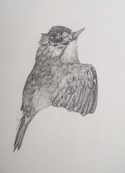 Bird Drawing II
