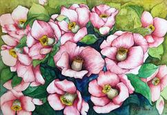 동백 Camellia