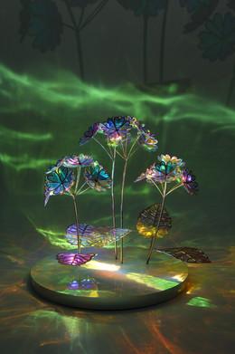 앵초 Primrose