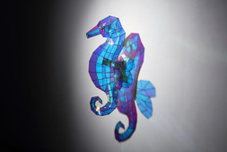 작은 날개 해마 Small wing seahorse