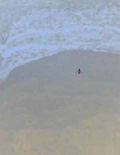 썰물 Ebb tide