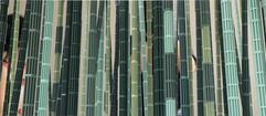 죽림(竹林) Bamboo grove