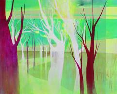 분할된 숲 Seperated forest