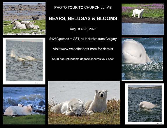 Bears & Belugas.jpg