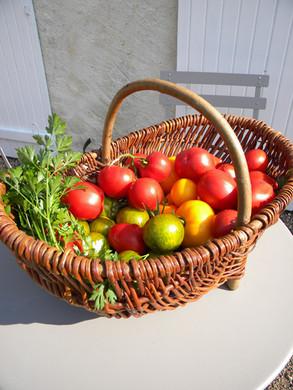 Récolte du jour