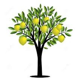 lemon tree 6_edited