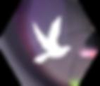 The Next Creator - Partenariat YouTube