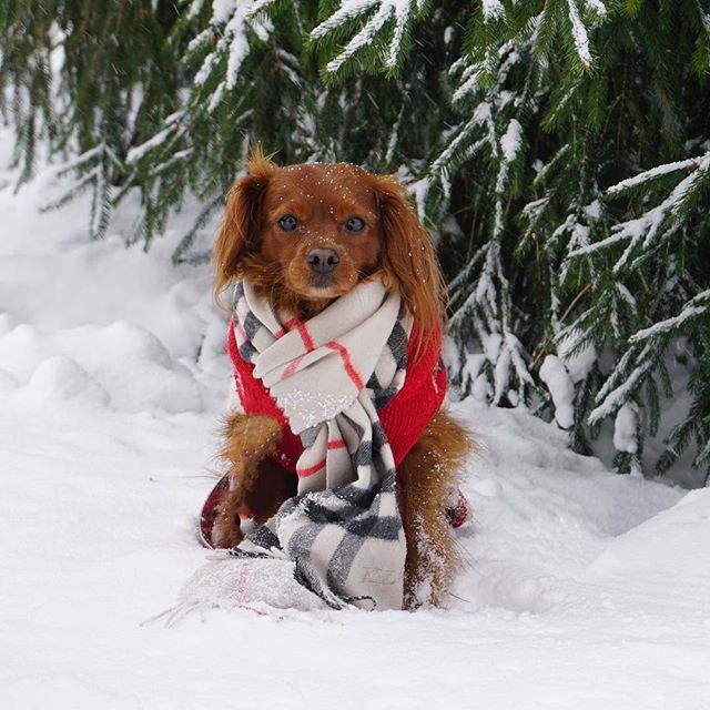 My little snow bear 🐻