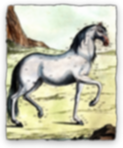Horse Page Pic.png