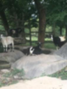 Petting Zoo.jpeg