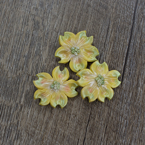 Yellow Dogwood Buttons