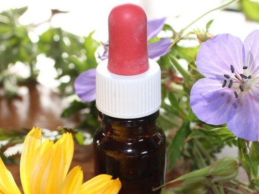 Terapia floral del doctor Bach : ¡Descúbrela con Camino Terapéutico!