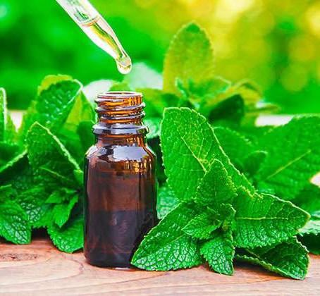 Aromaterapia: Aceite de menta, cómo usarlo.