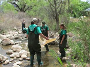 Creek Investigation