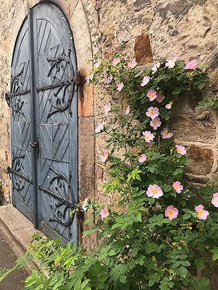 Hildesheimer Rose.jpg