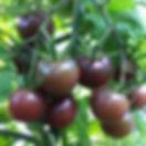Tomate sibérienne rose