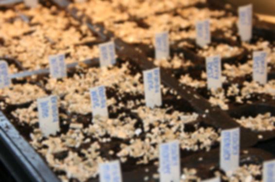 Semis multicellules de Marie-Pier Dumas