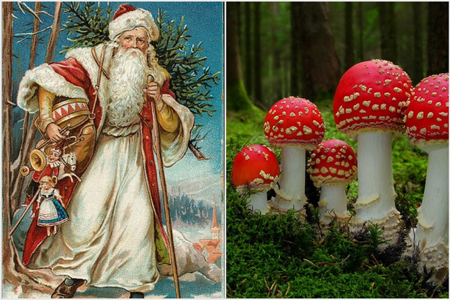 Psychedelic Santa: Uncovering The Hidden History of the Sacred Mushroom