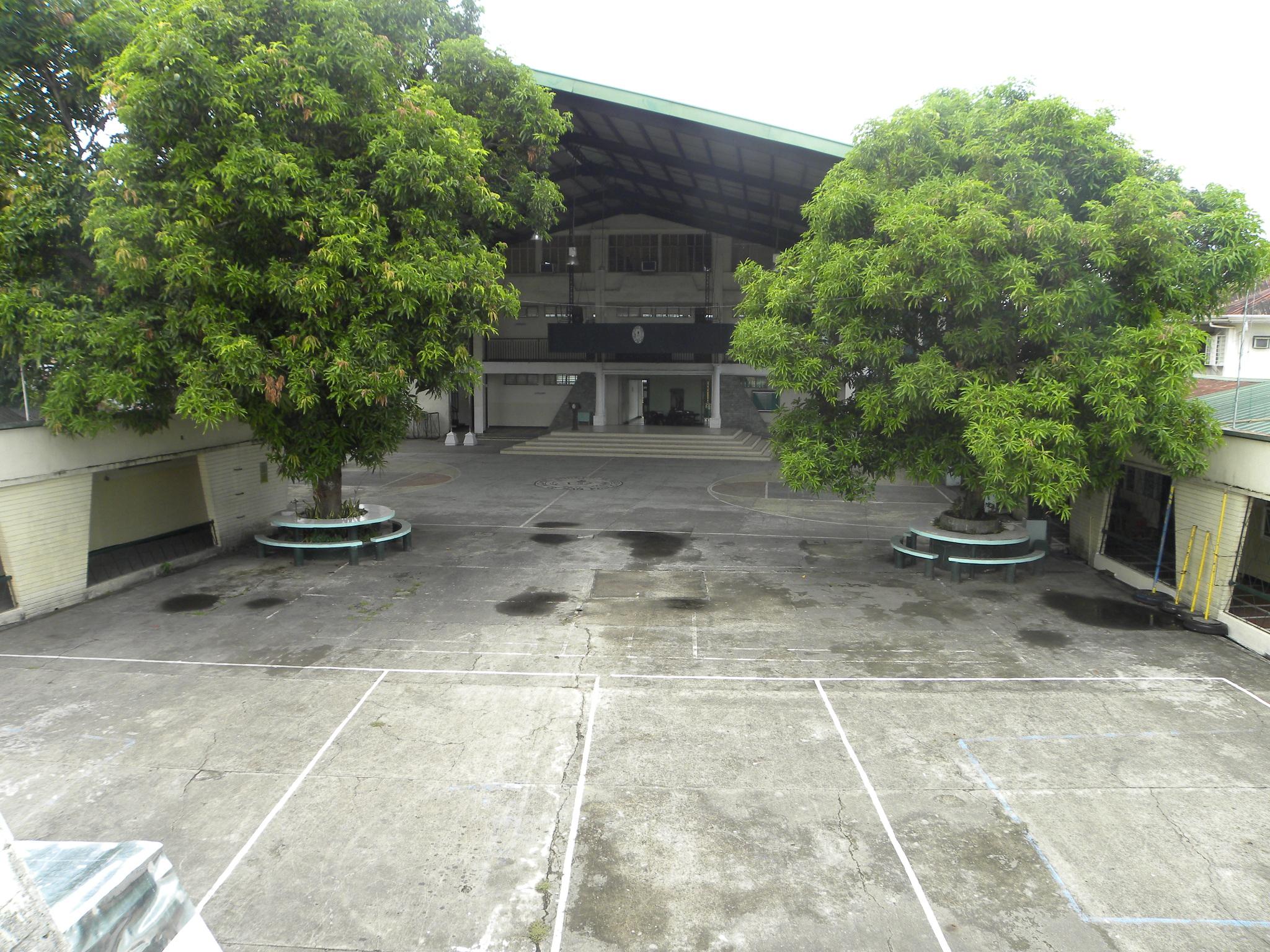 ETERNAL MANGO TREES