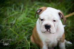 Hundefotografie by Fabiola Pühringer
